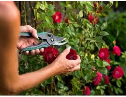 Как ухаживать за розами в саду летом.
